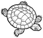 Tortue victorieuse
