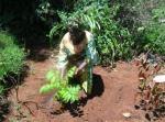Maathai planting a tree
