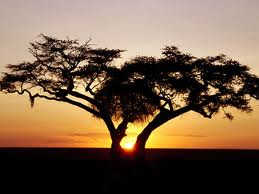 African tree at dusk