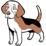 Chien / Dog