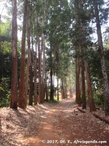 path_chemin