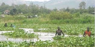 Lake Victoria1
