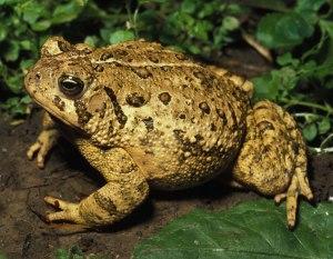Frog3