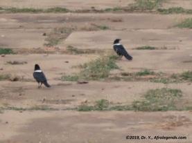 Nike Crow_Rwanda_1