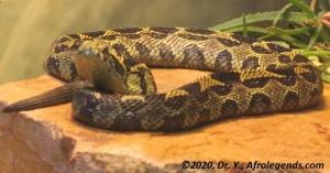 Snake - IMG_3466_1